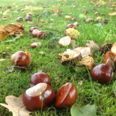 Alimentos que debes consumir este otoño